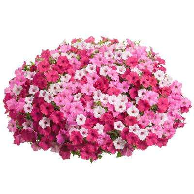 DIY Premium Hanging Basket Kit Above and beyond Combination with 15 in. Container