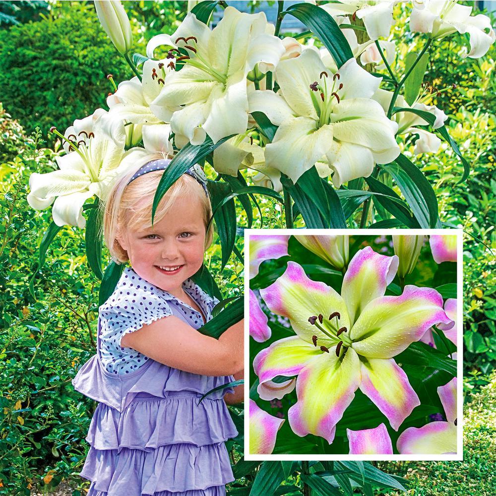 Giant Hybrid Lily Pretty Woman Bulbs (5-Pack)