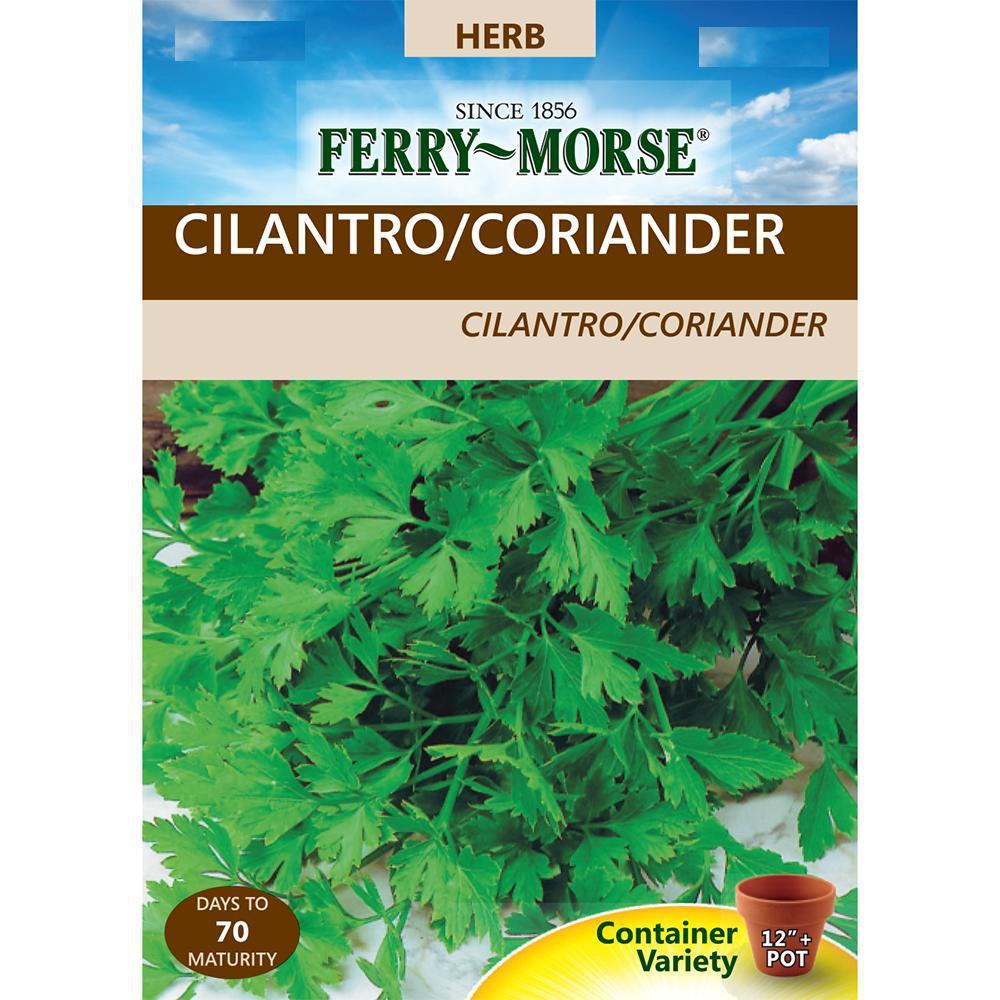 Cilantro Coriander Seed