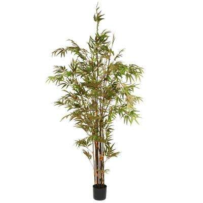 6.7 ft. Black Japanese Potted Bamboo Tree