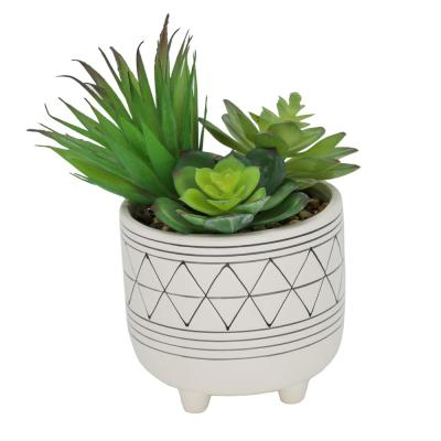 5 in. White Footed Black GEO Ceramic with Succulents Mix