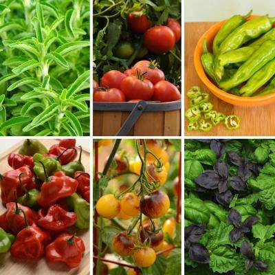 Foodie Fresh Vegetable Garden 2.5 in. Pots Basil-Pepper-Stevia-Tomato Plants (6-Piece)