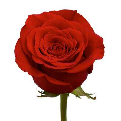 50 red roses fresh flower delivery