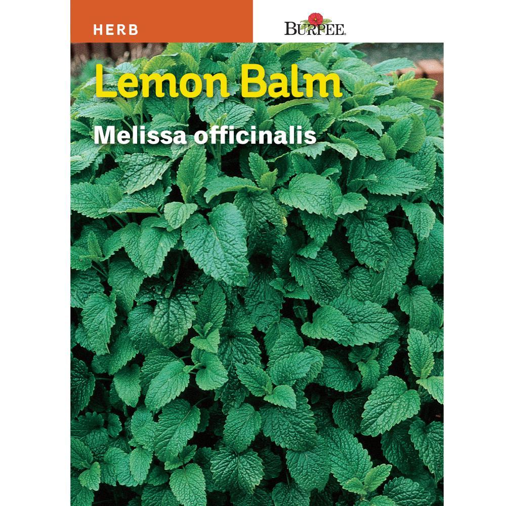 Lemon Balm Herb Seed