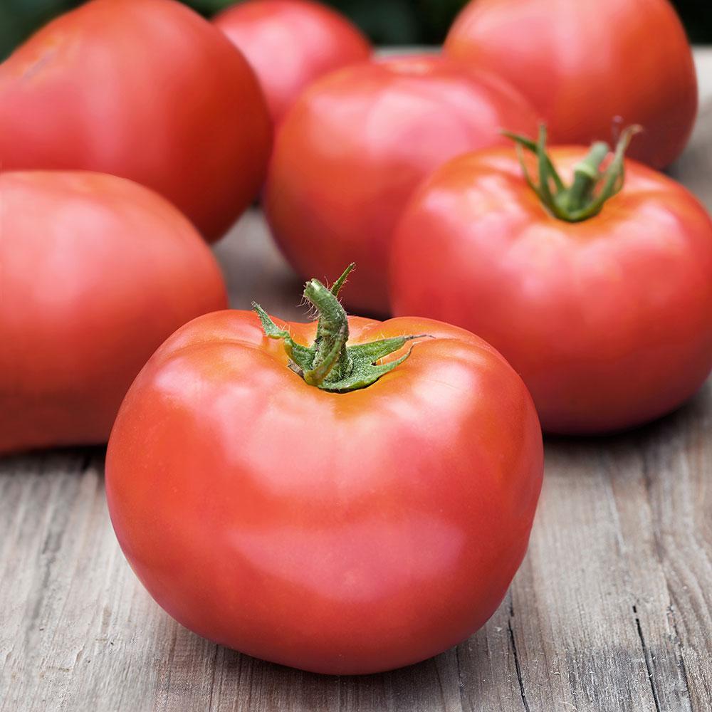 Bonnie Plants 606 Tomato-Atkinson Pack