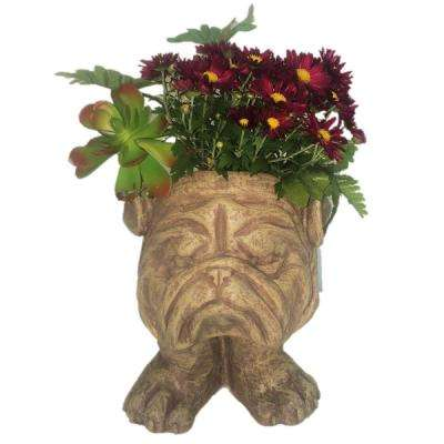 9 in. Stone Wash Bulldog Muggly Mascot Animal Statue Planter Holds 3 in. Pot