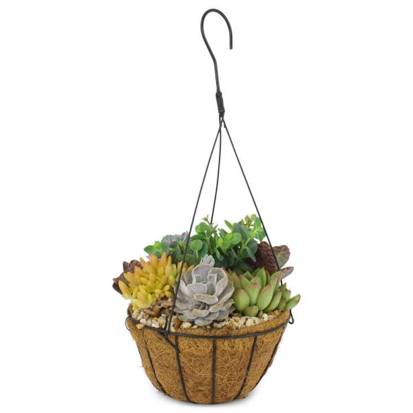 1 Gal. Succulent Plant Combo in 8 In. Coco Basket