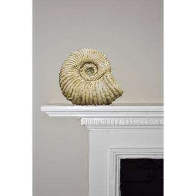 9 in. Fossil Upward Facing