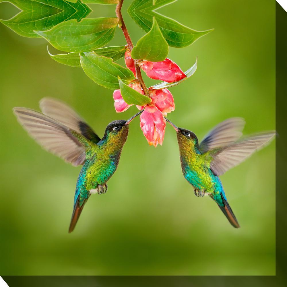 24 In X 24 In Hummingbird 8 Outdoor Canvas Wall Art