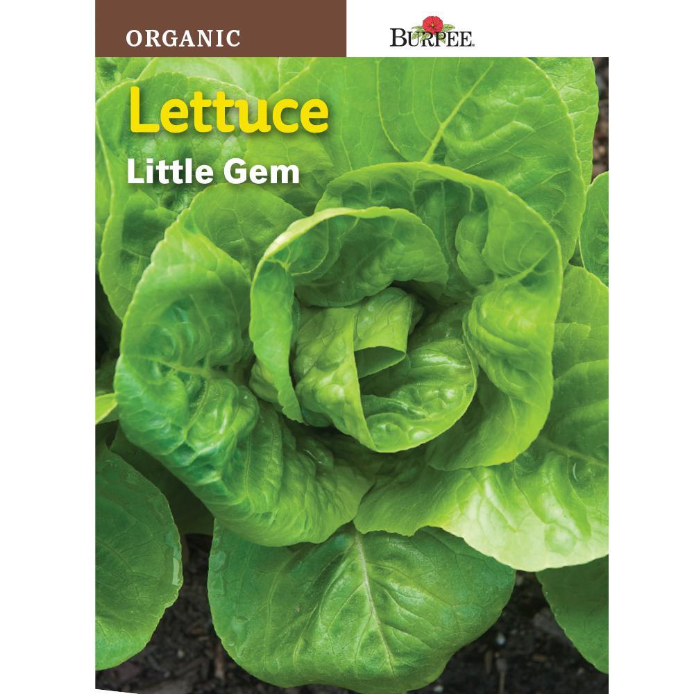 Burpee Lettuce Little Gem Organic Seed