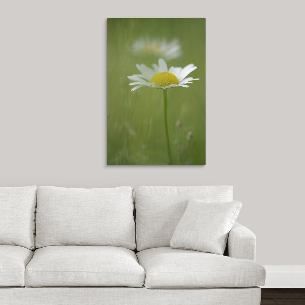"""Single White Petal Daisy in Field of Green"" by Mike Moats"