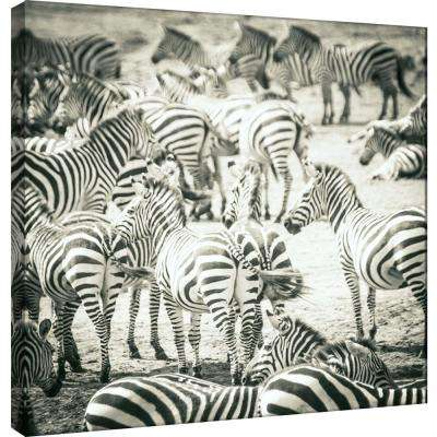 15.in x 15.in ''Zebras'' Printed Canvas Wall Art