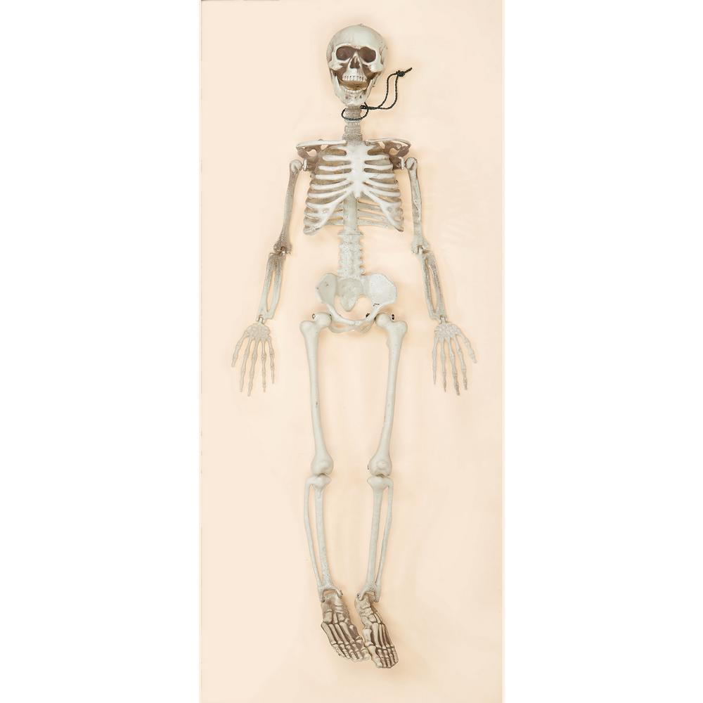 36 in. Halloween Posable Skeleton