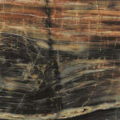 5 in. x 7 in. Laminate Countertop Sample in 180fx Petrified Wood with Gloss Finish