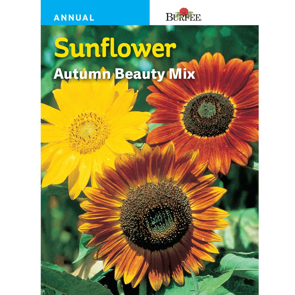 Bur Sunflower Autumn Beauty Mix Seed