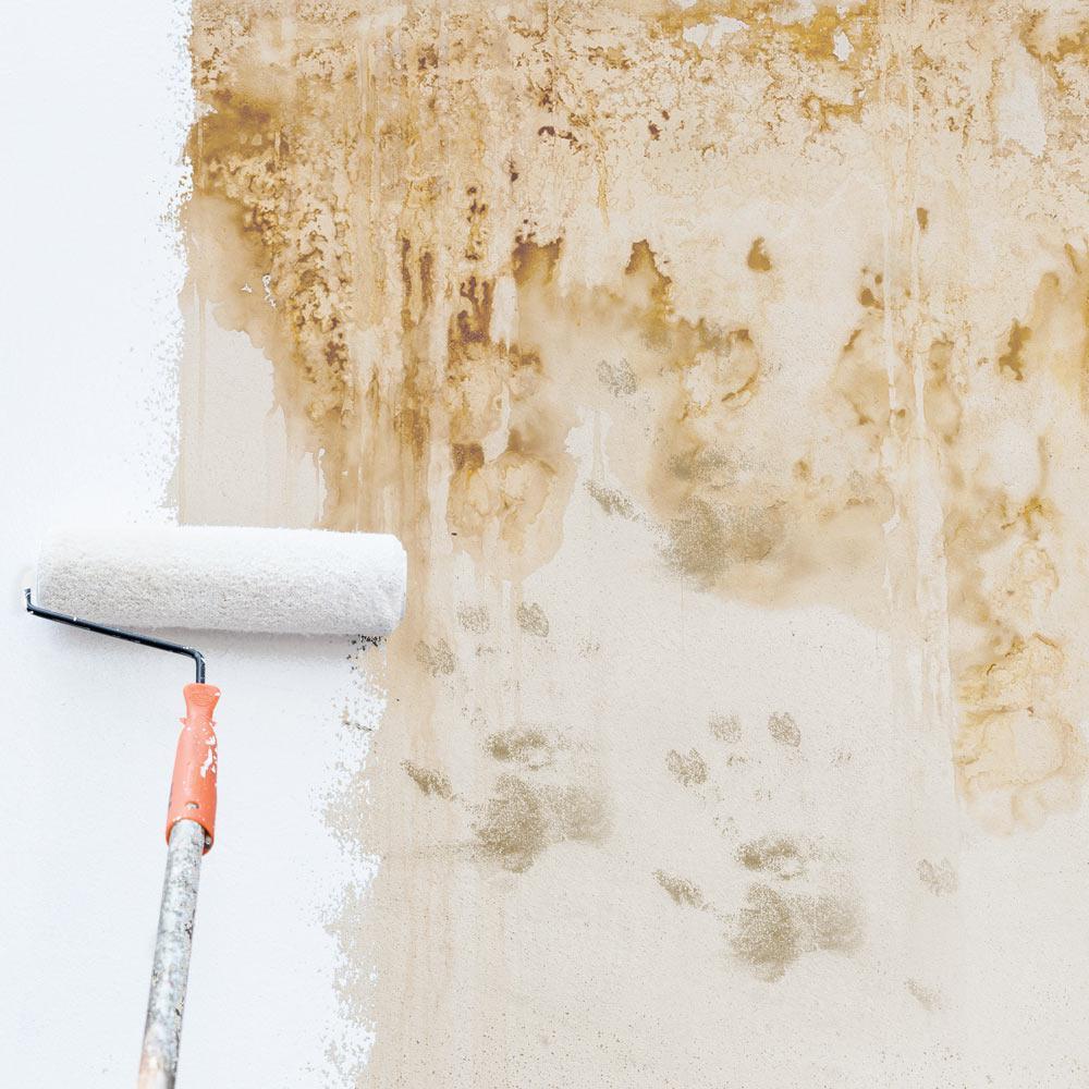 Gripper Interior Exterior White Primer
