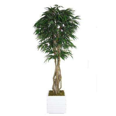 84 in. Tall Willow Ficus with Multiple Trunks in 14 in. Fiberstone Planter