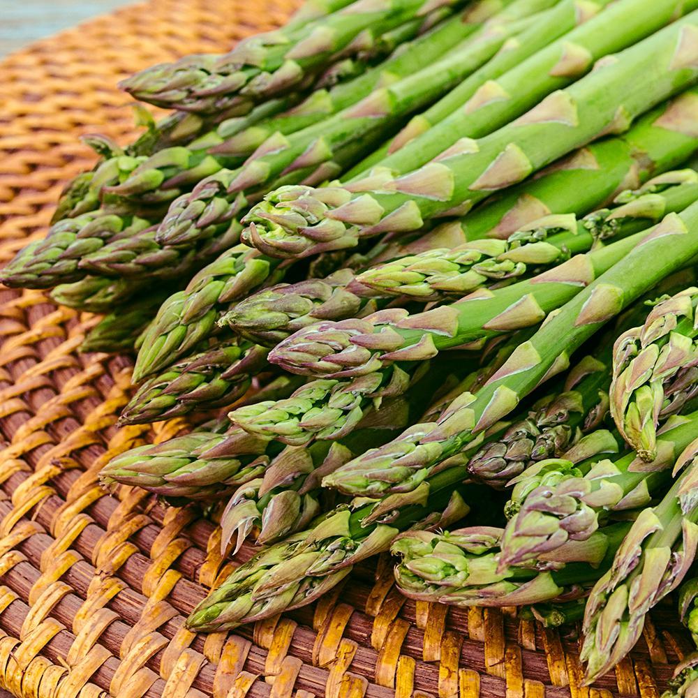 Aspargus Jersey Giant Hybrid, Live Bareroot Plants (1-Bundle)
