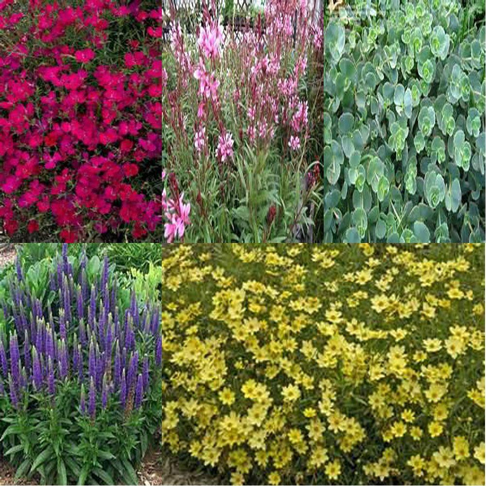 OnlinePlantCenter 1 gal. Full Sun Drought Tolerant Garden 5 Live Plants Package