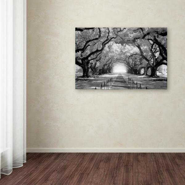 Trademark Fine Art 16 In X 24 In Oak Alley Inf Check By Mike Jones Photo Floater Frame Nature Wall Art Ali17841 C1624g The Home Depot