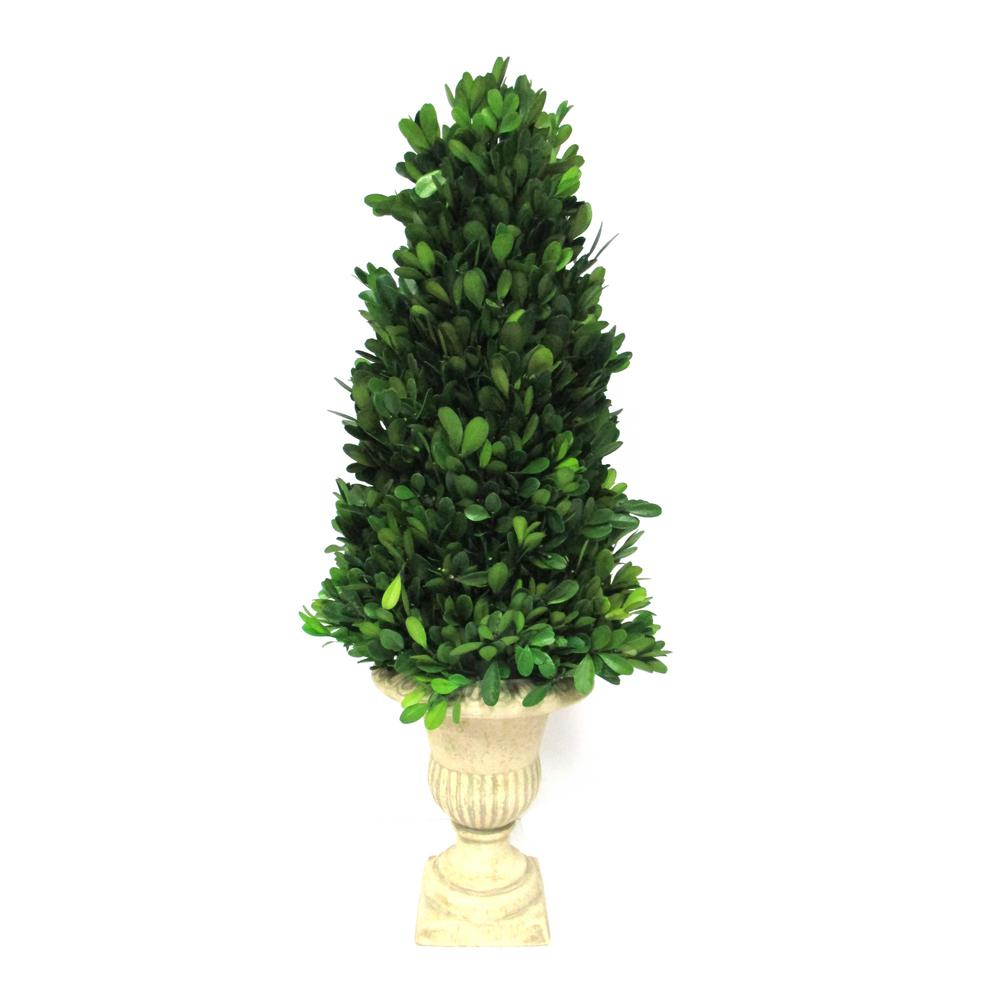 Boxwood Collection 21 in. Preserved Boxwood Conical Topiary in Urn (1-Pack)