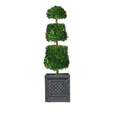 50 in. Tall Preserved Natural Boxwood Cone Topiary in Planter