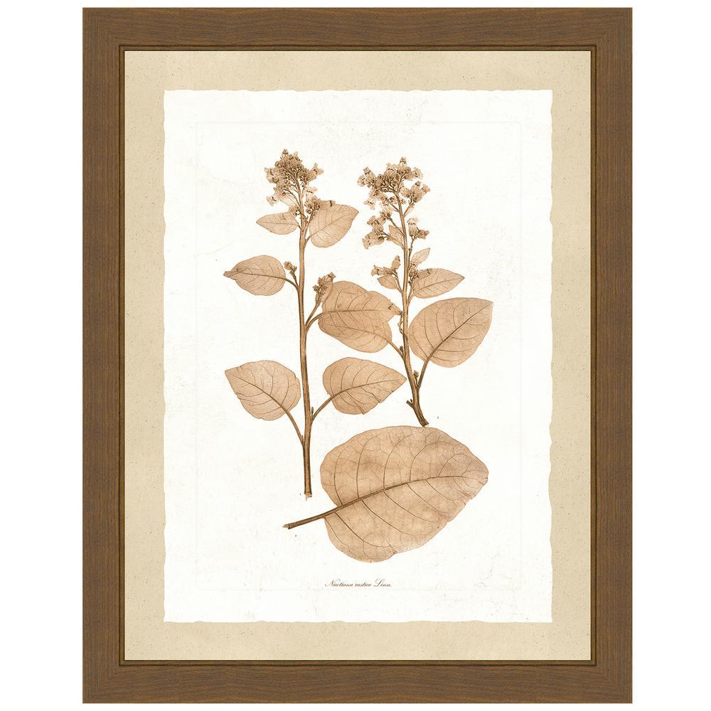 """Delicate Botany Herbarium II"" Framed Archival Paper Wall Art (26 in. x 32 in. in full size)"