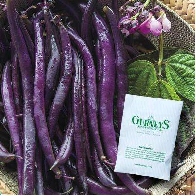 Bush Bean Purple Queen Improved (2 oz. Seed Packet)