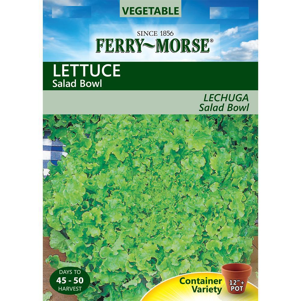 Lettuce Salad Bowl Seed