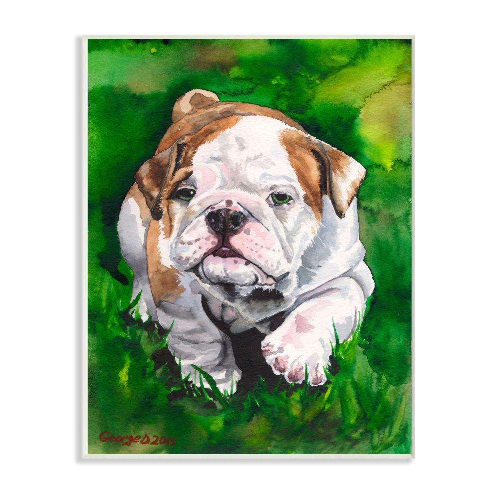 Stupell Industries 10 In X 15 In English Bulldog Puppy Dog Pet By George Dyachenko Wood Wall Art Pwp 256 Wd 10x15 The Home Depot