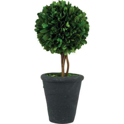 4.25 in. W x 13 in. H Preserved Boxwood Ball Topiary in Black Terracotta Pot