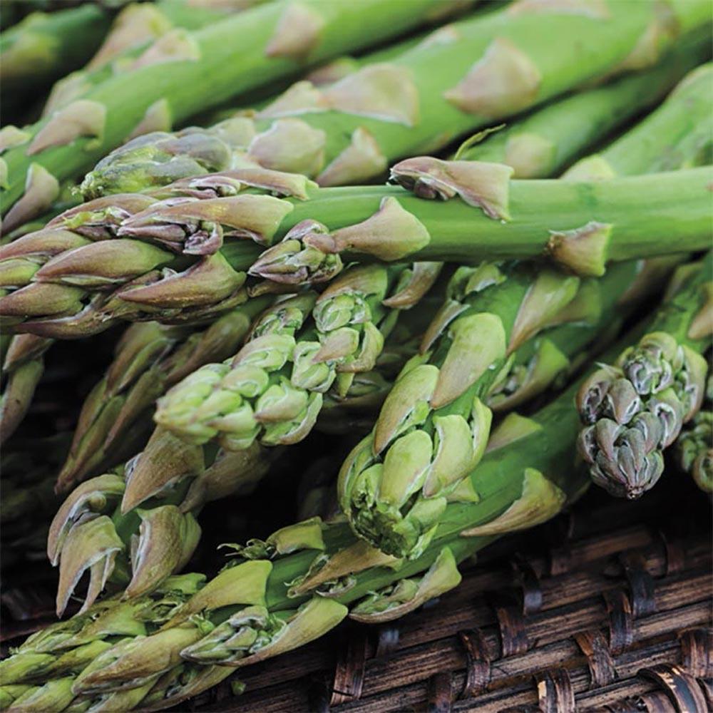 Asparagus Plants Garden Flowers Garden Center The Home Depot