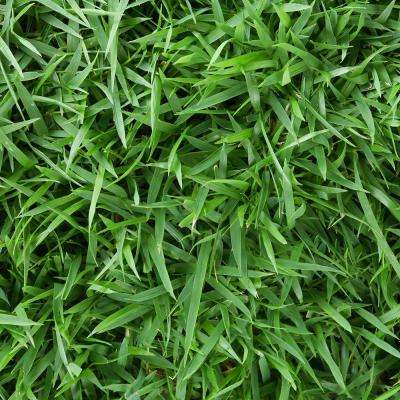 Zoysia Sod Plugs (36-Count Trays)