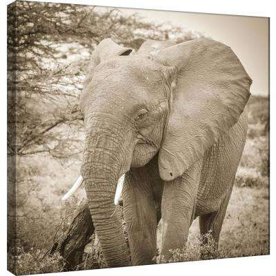 15.in x 15.in ''Young Elephants'' Printed Canvas Wall Art