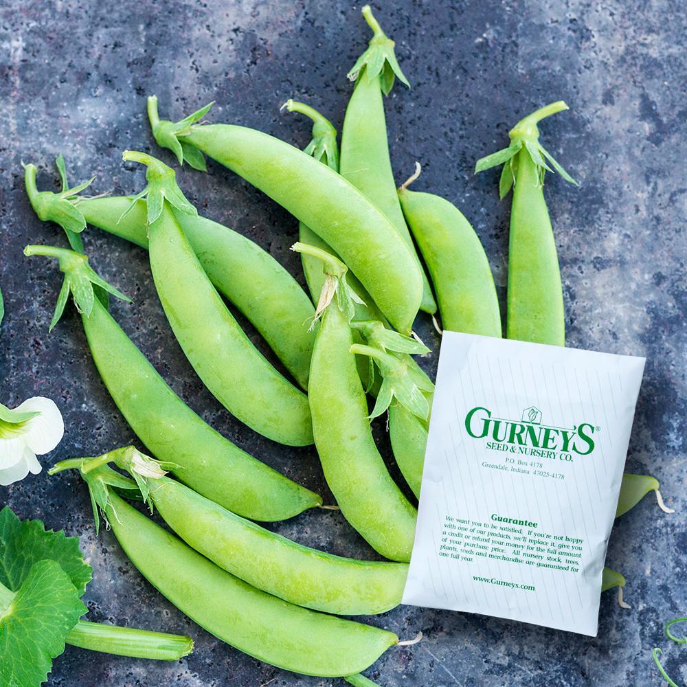 PEAS SUGAR ANN SNAP PEAS HEIRLOOM Seed  FREE  Shipping 1,900  NON GMO