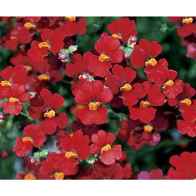 4-Pack, 4.25 in. Grande  Sunsatia Cranberry (Nemesia) Live Plant, Red Flowers