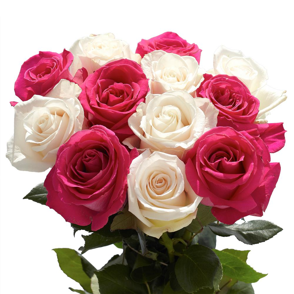 Globalrose fresh white roses 100 stems 100 white roses md the 50 stems of roses 25 hot pink and 25 white izmirmasajfo