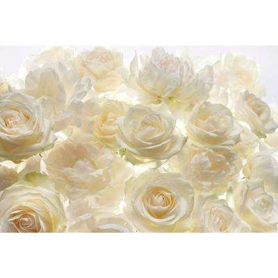 145 in. W x 98 in. H Ivory Rose Wall Mural