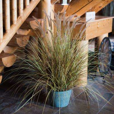 45 in. x 36 in. Brown Dogtail Everyday Grass Bush with Metal Pot