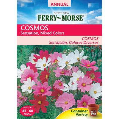 Cosmos Sensation Mixed Colors Seed