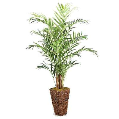 9 ft. Indoor Kentia Palm in Tall Square Banana Leaf Basket
