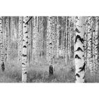 98 in. H x 145 in. W Birch Forest Wall Mural