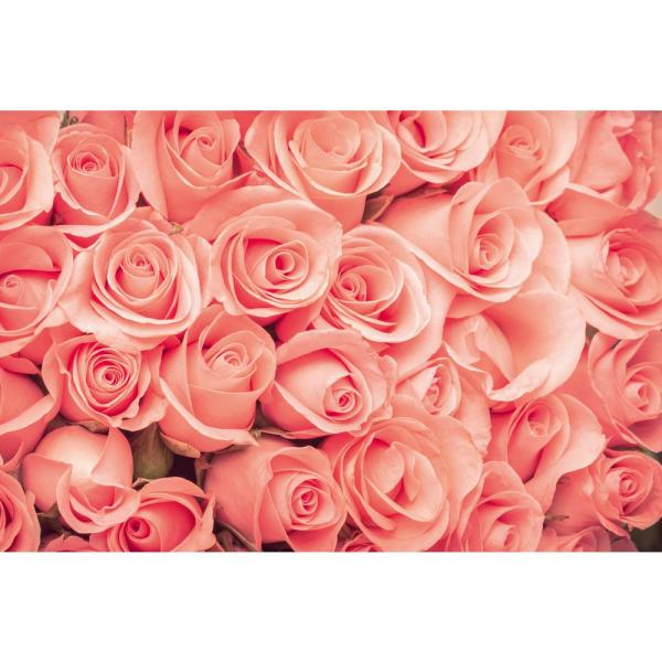 Photographic Roses Farm and Country Wall Mural