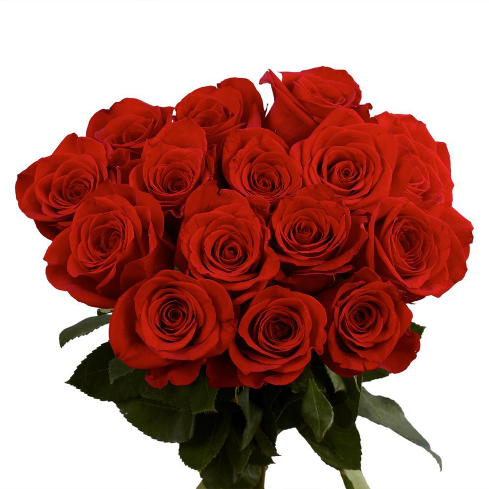 Globalrose Fresh Red Roses (400 Stems)
