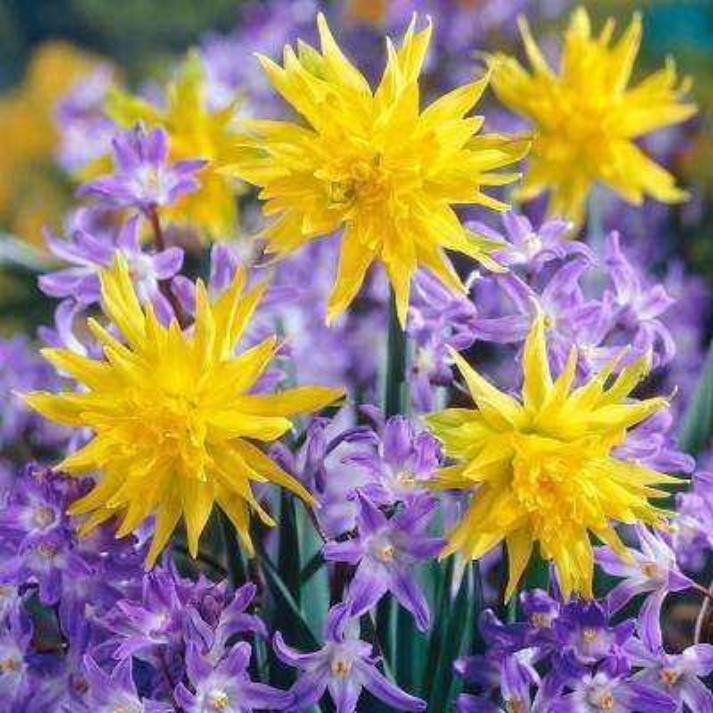 Years Of Blooms Garden (Set of 50)