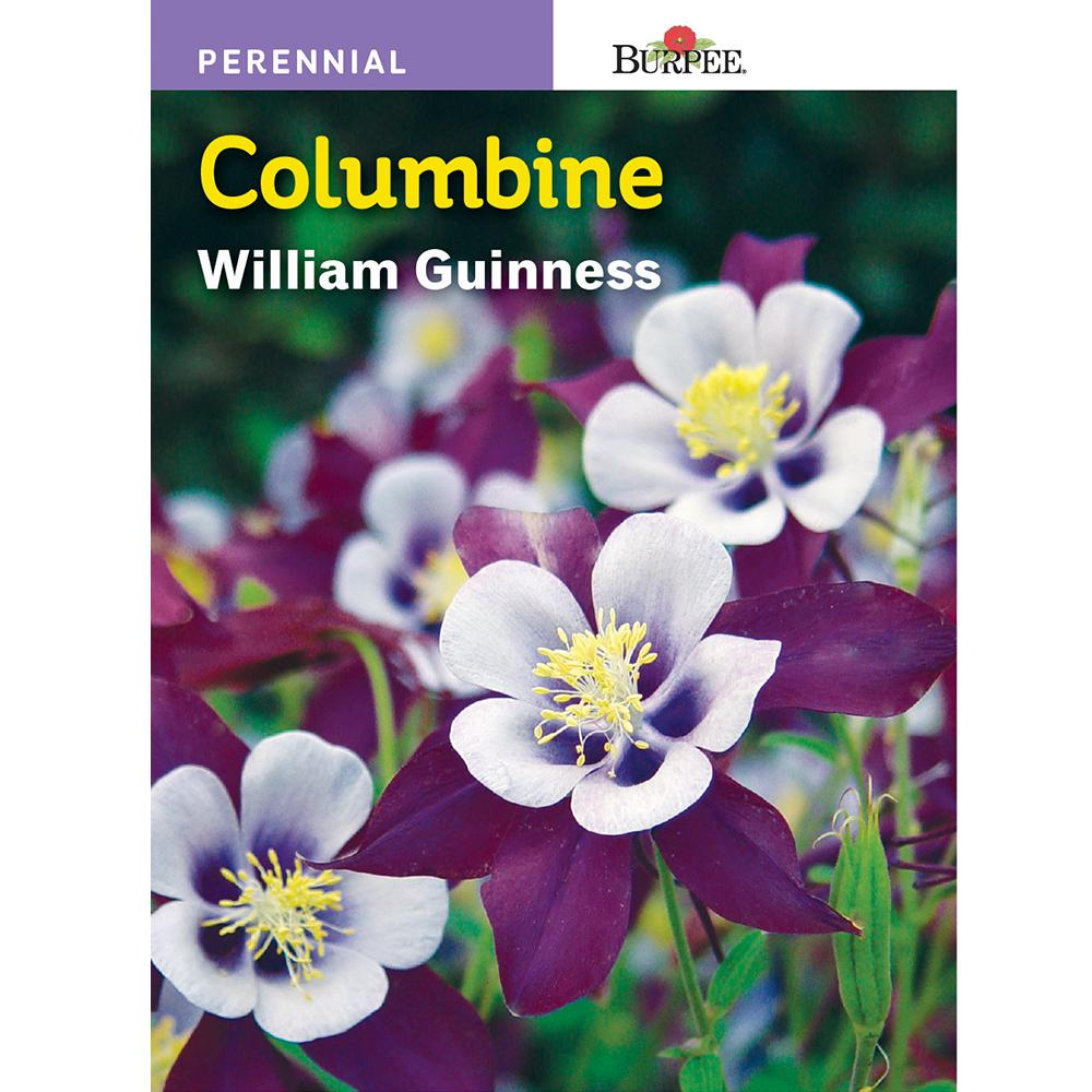 Burpee william guinness columbine flower seed 41848 the home depot burpee william guinness columbine flower seed izmirmasajfo