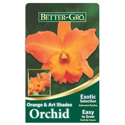 4 in. Orange Cattleya Packaged Orchid