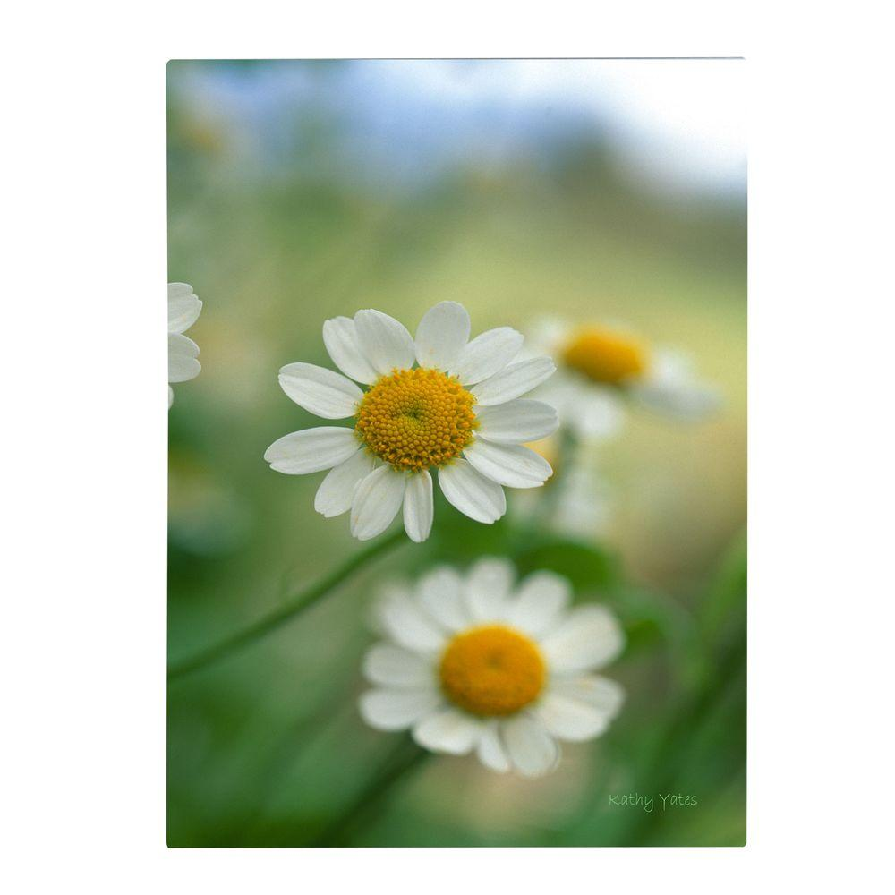 Trademark Fine Art 22 in. x 32 in. Chamomile Canvas Art