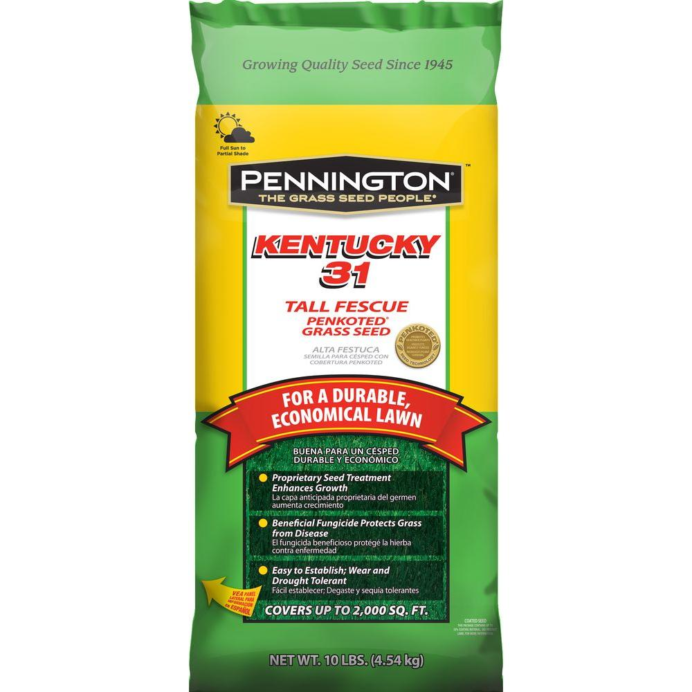 Pennington Kentucky 31 10 Lb Tall Fescue Penkoted Gr Seed