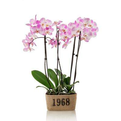 Pink 10 In Rustic Orchid Duo Plant Burlap Pot 4 Stems